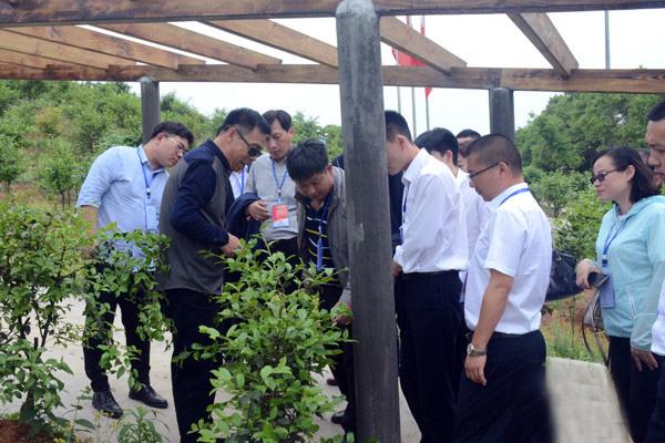 从江县油茶产业化项目