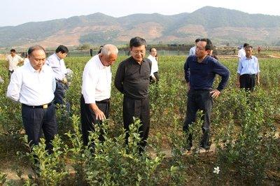 邵阳县油茶产业小镇全域旅游示范区修建性详规编制服务项目
